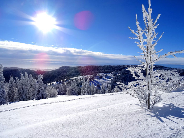 schnee im schwarzwald