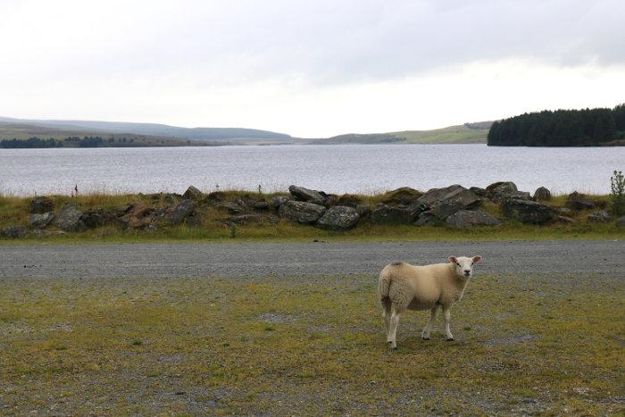 Reiseroute Wales Llyn Brenig