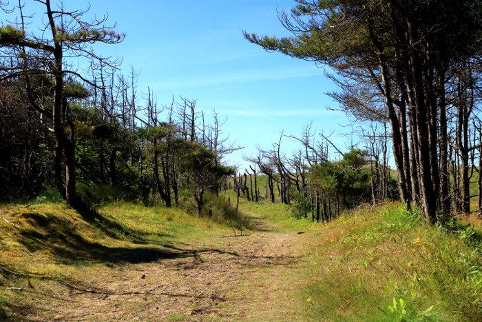 Reiseroute Wales Newborough Forest